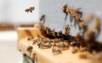 L'IA et la Dataviz au service de la biodiversité et de l'environnement