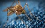 Tableau, Mapbox, Exasol et Alteryx investissent 4,3 millions de dollars dans la lutte contre le paludisme pour venir en aide à plus de 60 millions de personnes