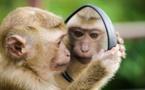 Le traitement visuel de la data : sommes-nous aussi intelligents que des chimpanzés?