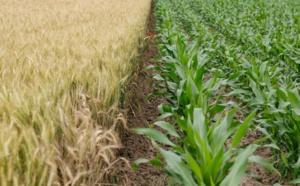 AGCO annonce une nouvelle communication de données avec la solution Climate FieldView, la plateforme d'agriculture numérique de The Climate Corporation