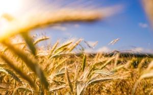 Constantin Pavléas conseille et accompagne API-AGRO pour la mise en place d'une plateforme d'échange de données agricoles basée sur des technologies souveraines